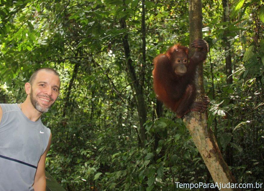 Danilo e orangotango