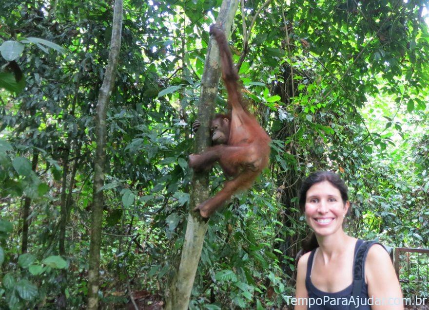 Mila e orangotango
