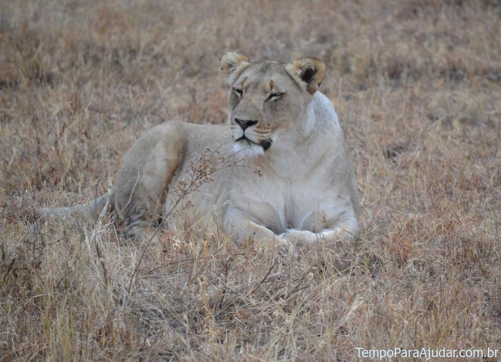 Leoa na África do Sul