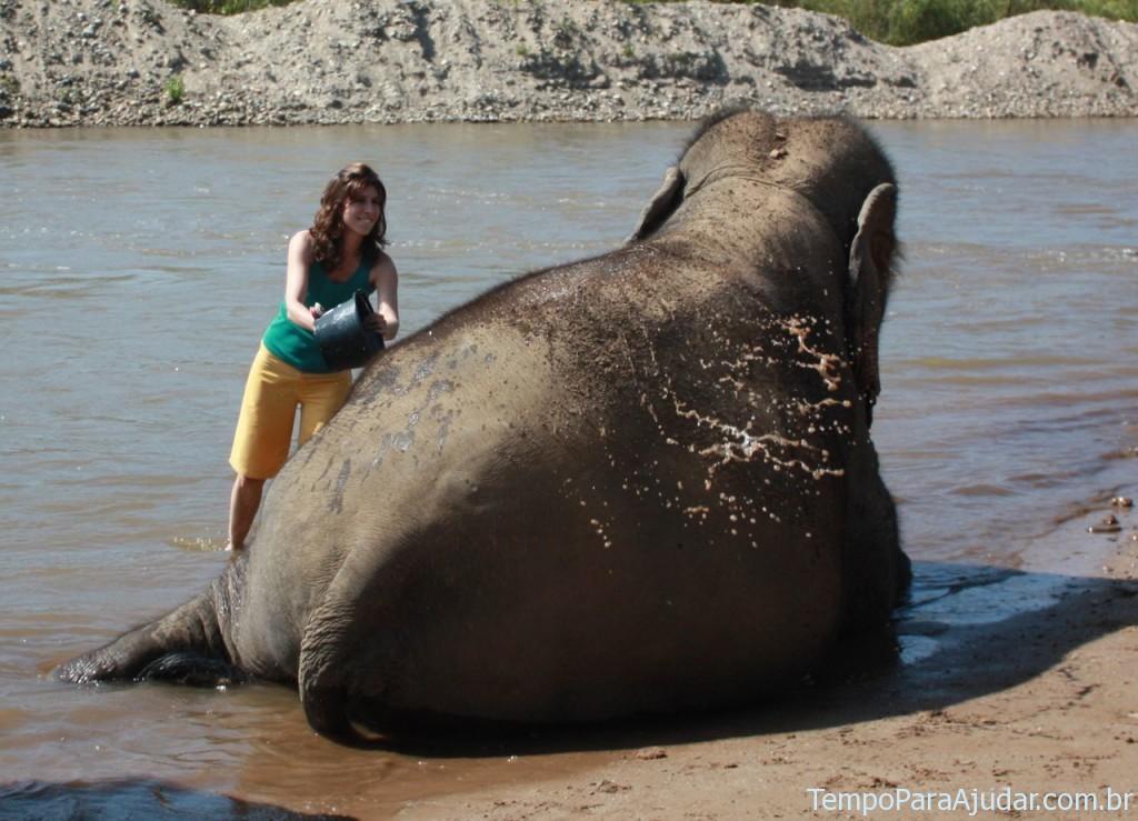Dando banho nos elefantes