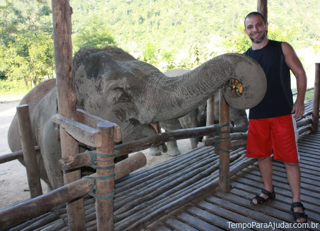 Alimentando elefantes na Tailândia
