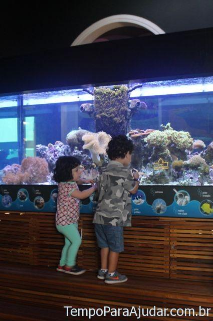 Deslumbrados com o aquário