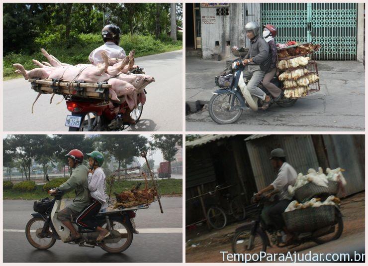 Animais andando de moto