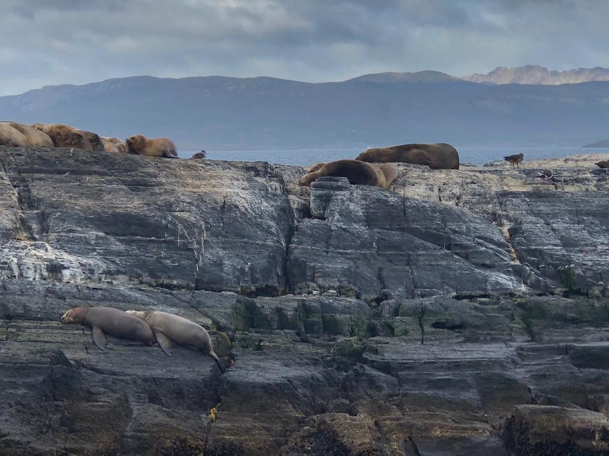 Lobos marinhos em Ushuaia